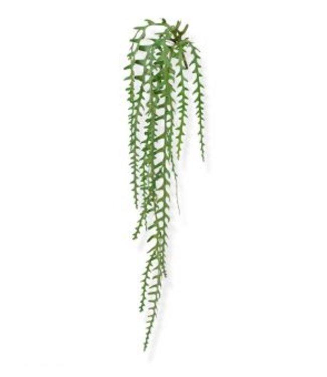 Epiphyllum  hangplant 110 cm