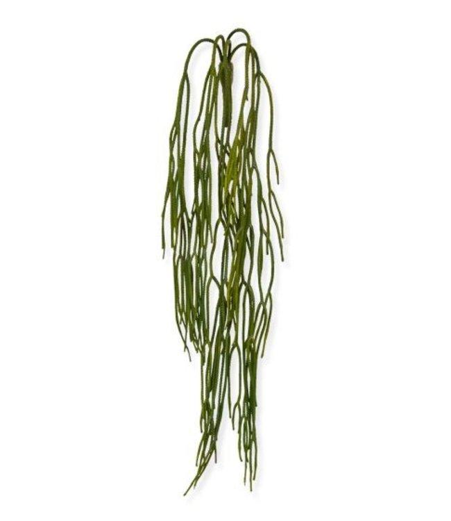 "Rhipsalis Pilocarpa ""Koraalcactushanger""65 cm"