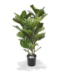 Lyrata of Tabaksplant 95 cm