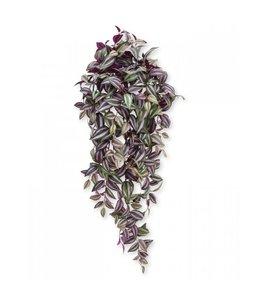 Tradescantia hangplant 100 cm paars - Copy