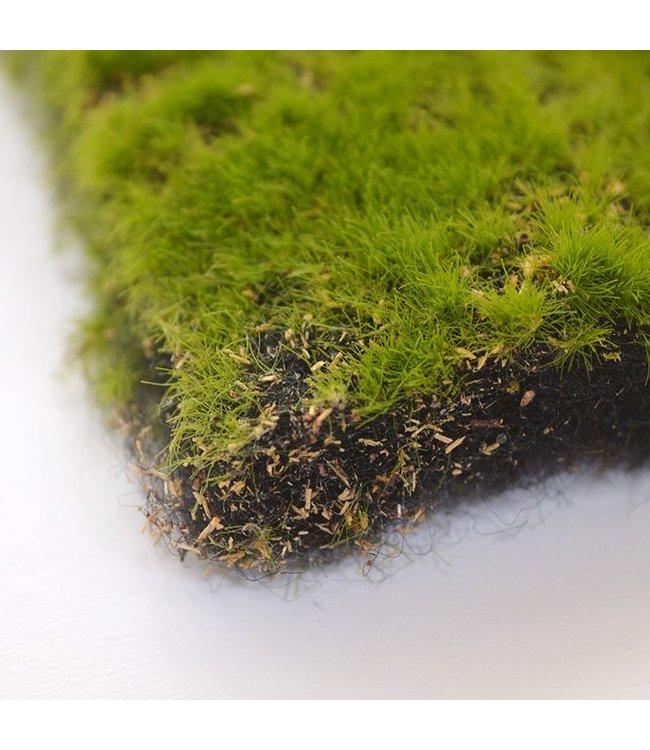 Mos mat kunst  m2 100 x 100 cm groen