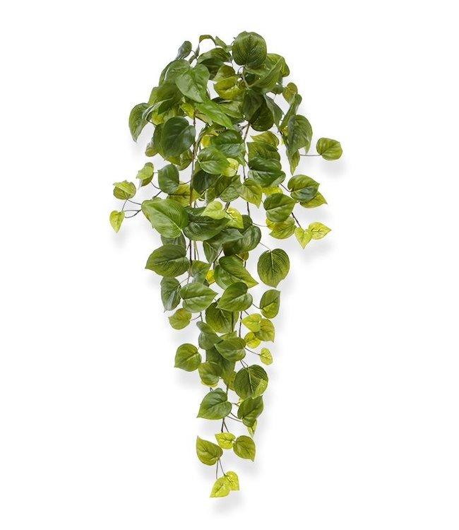 Philodendron hangplant 65 cm
