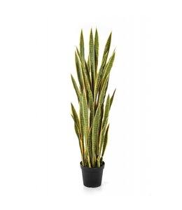 Sanseveria bont 120 cm