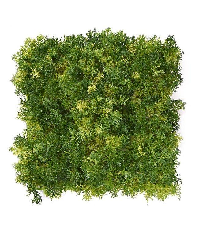 Rendier mos matje 25 x 25 cm Groen