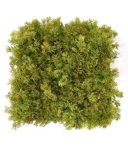 Rendier mos matje 25 x 25 cm Groen-bruin