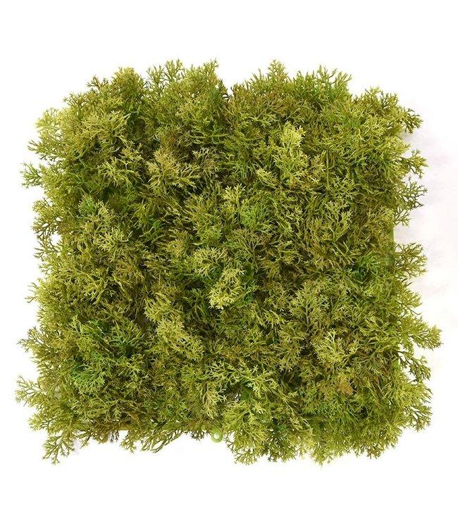 Rendier mos matje 25 x 25 cm Groen -bruin