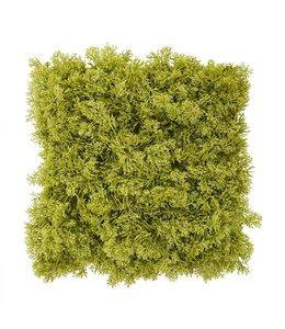 Rendier mos matje 25 x 25 cm Gif-groen