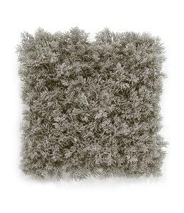 Rendier mos matje 25 x 25 cm Zacht -grijs