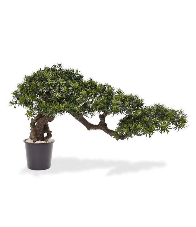 Podocarpus Bonsai Feng Shui 70 x 130 cm