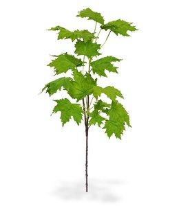 Maple tak de luxe 80 cm groen