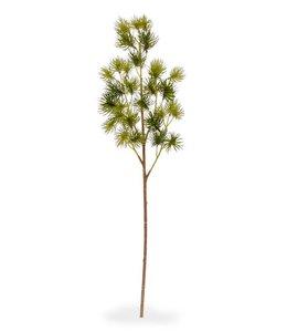 Pinus mini tak 50 cm