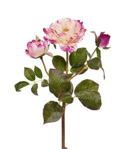 Rozentak Ruffle 50 cm Fuchsia