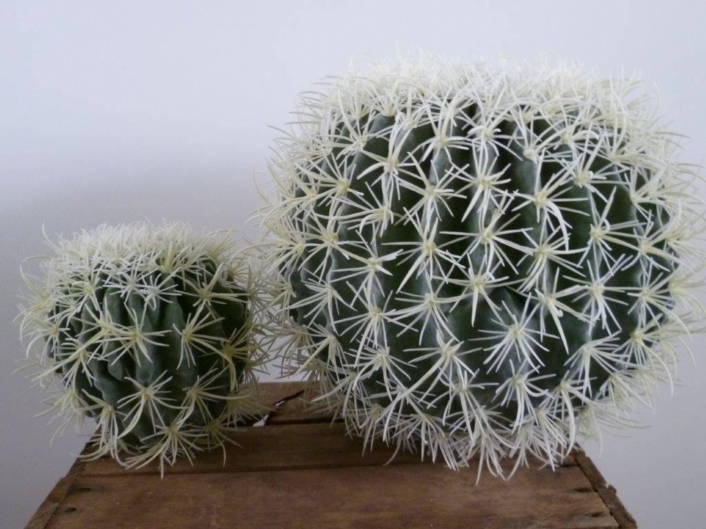 Kunst Cactussen