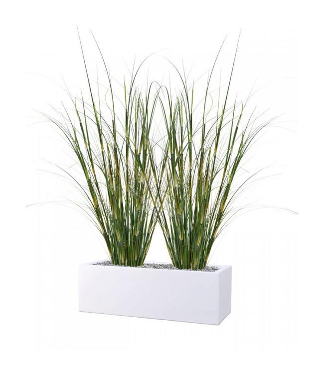 Bamboe grasplant 80 cm