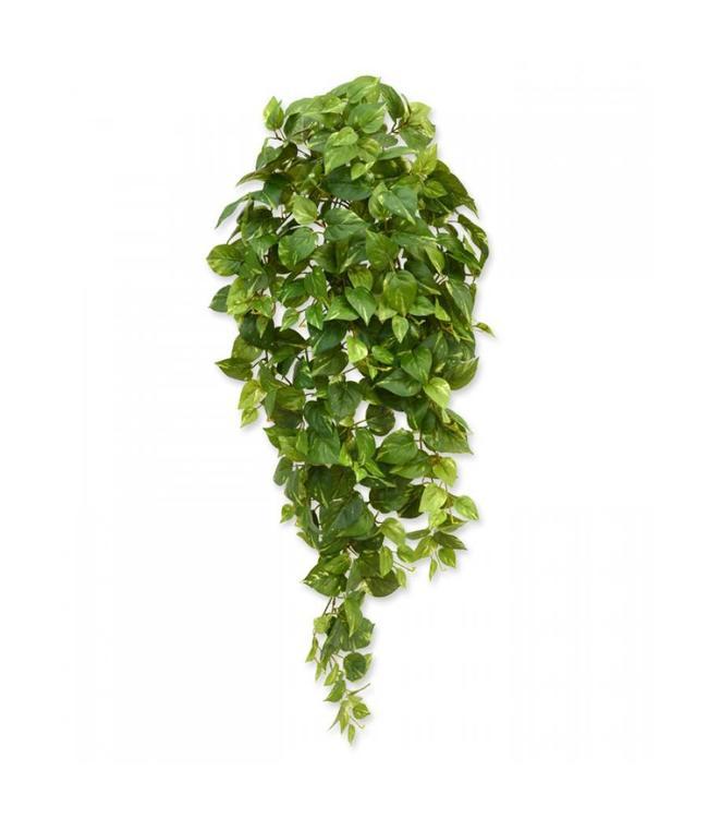 Scindapsus hangplant 100 cm bont