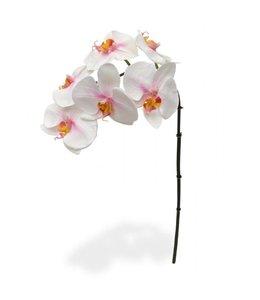Phalaenopsis Tak x6 55 cm roze