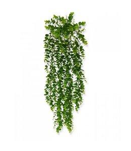 Eucalyptus Hangplant 70 cm