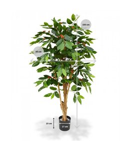 Coffee Arabica Deluxe 150 cm N