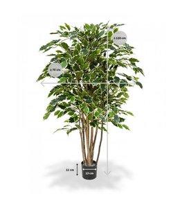 Ficus Exotica Deluxe 125 cm bont