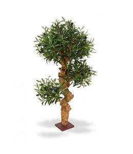 Olijf Bonsai x3 90 cm op voet