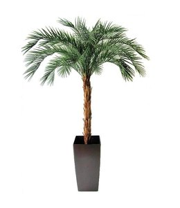 Phoenix Palm OD Deluxe 225cm