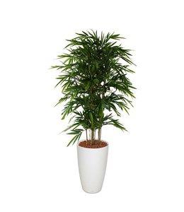 Bamboe Deluxe 150cm