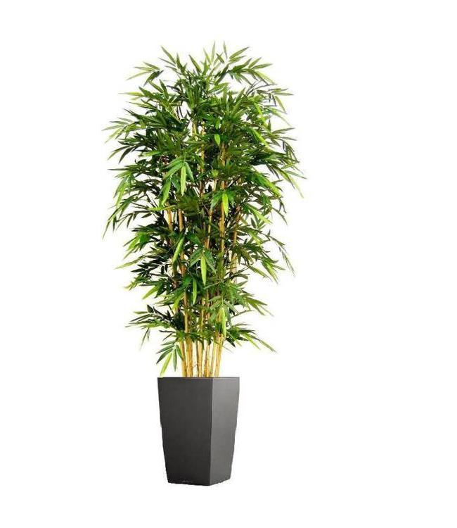 Bamboe Deluxe 240cm