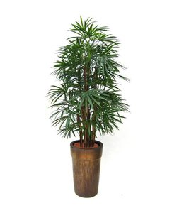 Raphis palm N 190cm