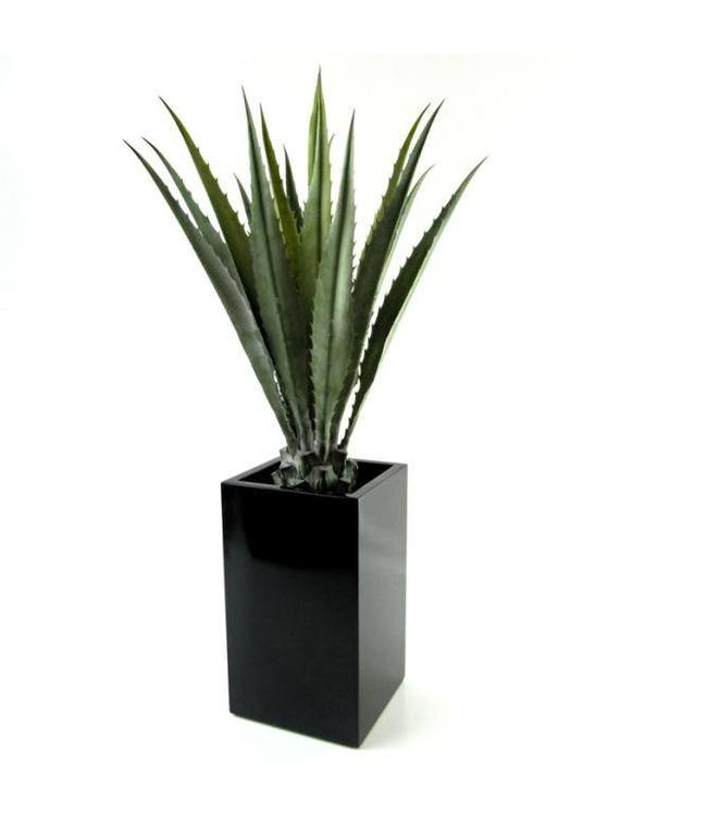 Agave Deluxe 95cm
