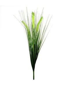 Pennisetum Pluimgras boeket 50cm