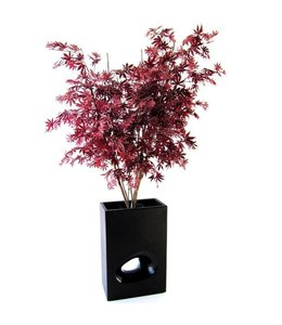 Acer Maple Y deluxe 160cm burgundy