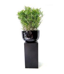 Oriëntal Bamboe 70 cm