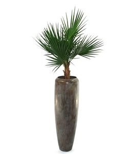 Washingtonia Kunstpalm Deluxe 100cm