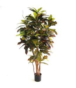 Croton Deluxe 130cm