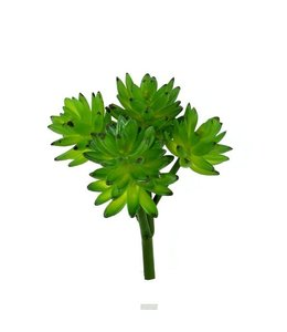 Echeveria Vetplant boeket x22