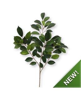 Ficus Folia Tak FR
