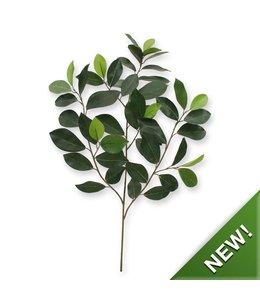 Ficus Compact Tak x 52 FR
