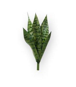 Sanseveria Boeket 40 cm groen