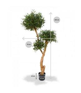 Olijf Bonsai De luxe x3 160 cm