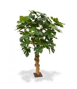 Vijgenplant Deluxe 100 cm op voet