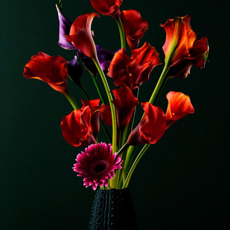 WANDKRAFT Reds, rode kelkbloemen