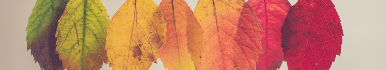 Een kleurrijke herfst met De Knikkerprins