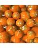 Lente - oranje 25mm