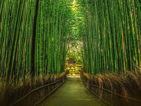 Bamboe Sokken: Duurzaam en nog fijn voor je voeten ook!
