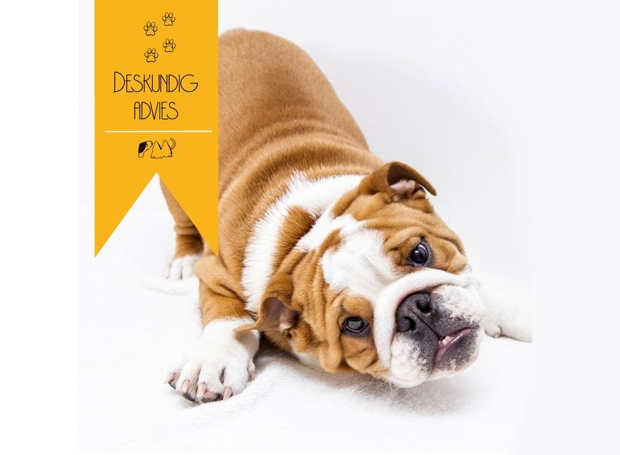 Kun je je hond in optimale gezondheid houden met alleen maar droogvoer?