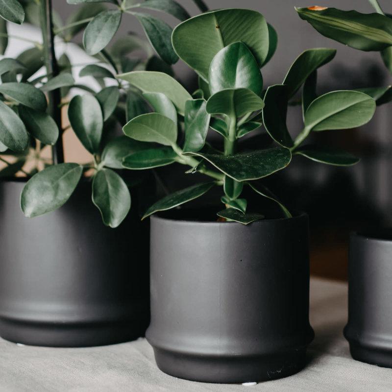Black Pot L