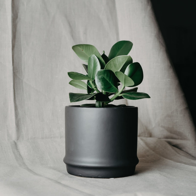 Black Pot M