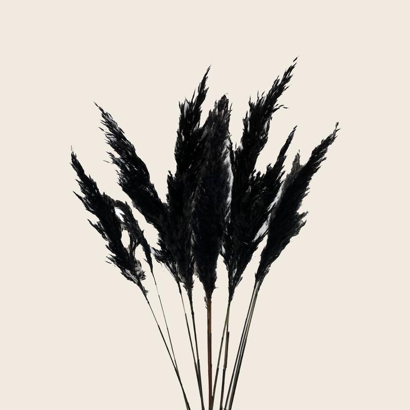 Pampas Grass Black  8pcs