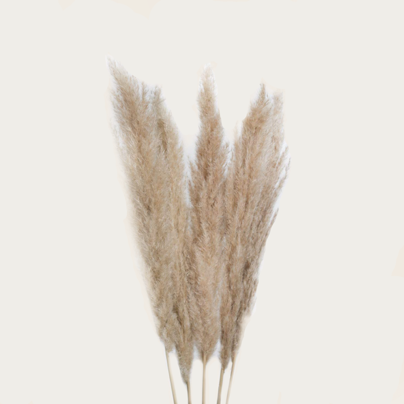 Pampas Grass Natural 3pcs