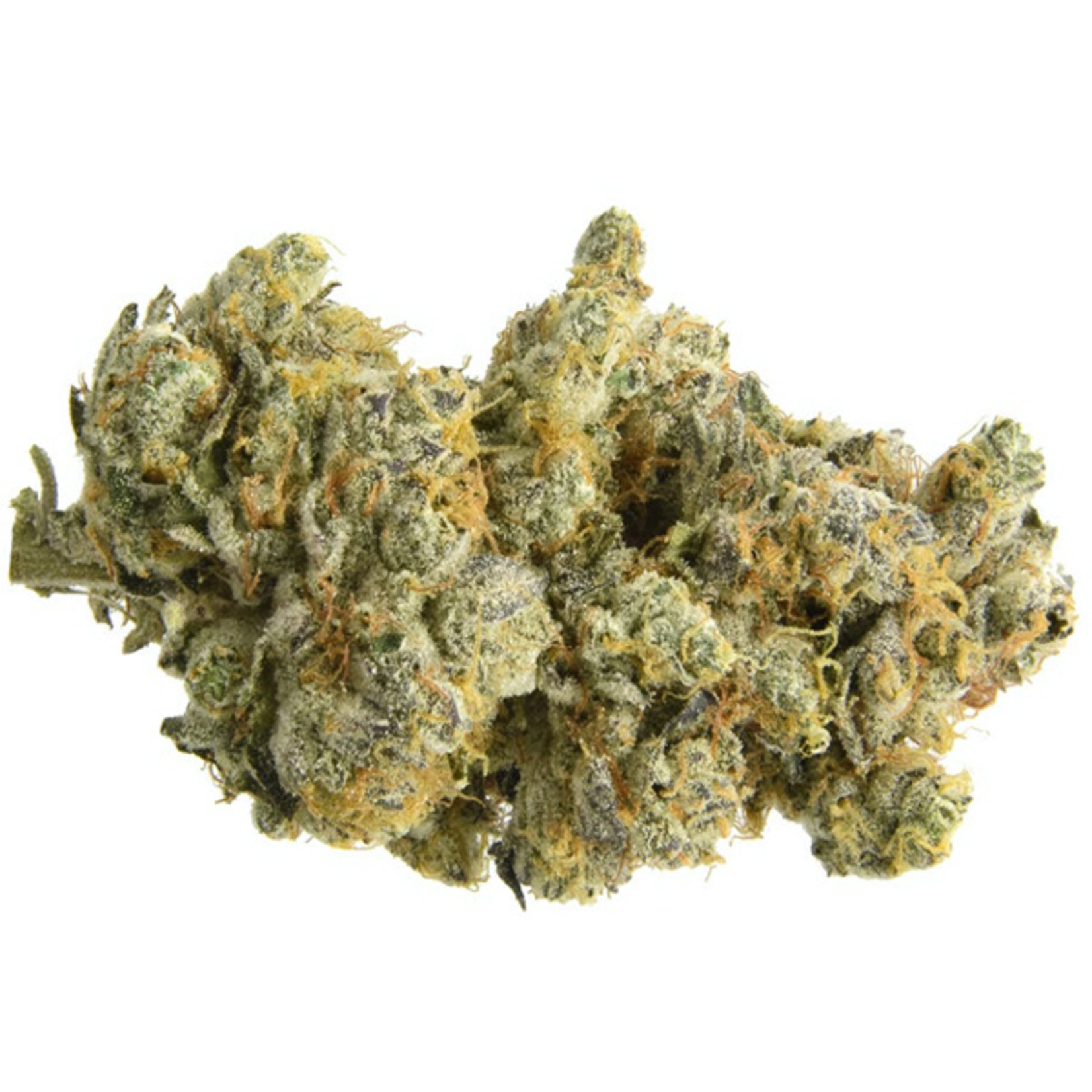 Auto GMO Cookies cannabis seeds